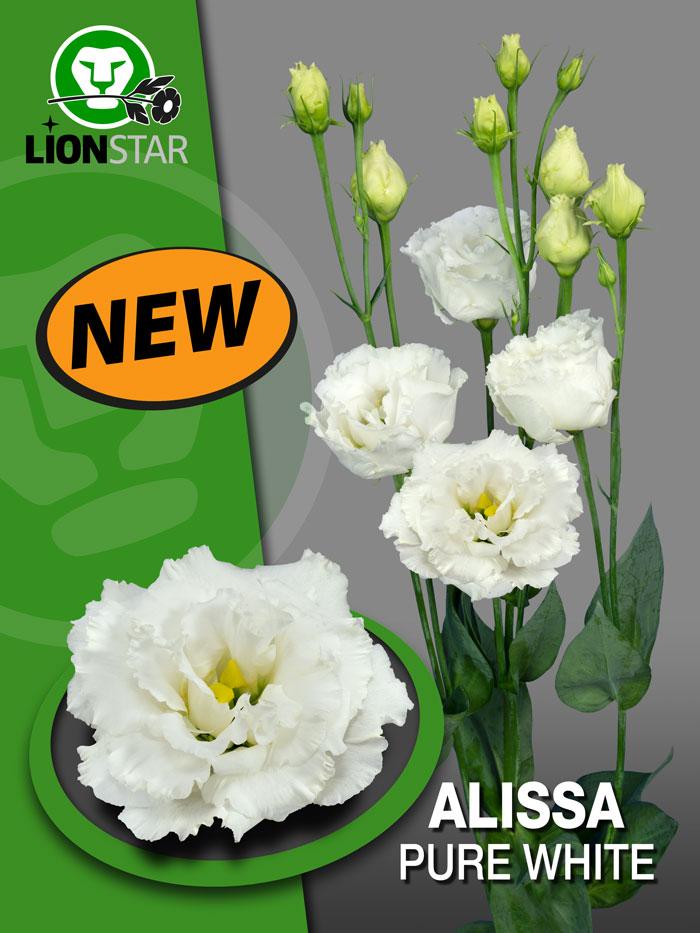 Alissa Pure White