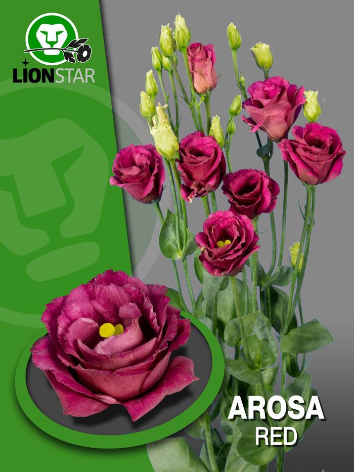 Arosa Red