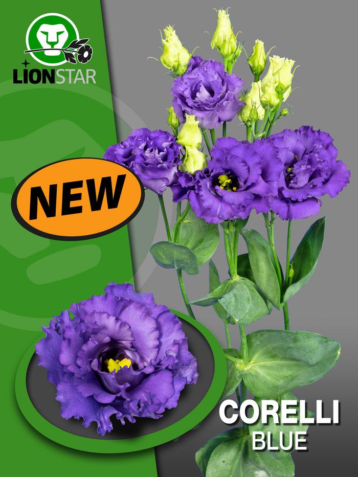 Corelli Blue