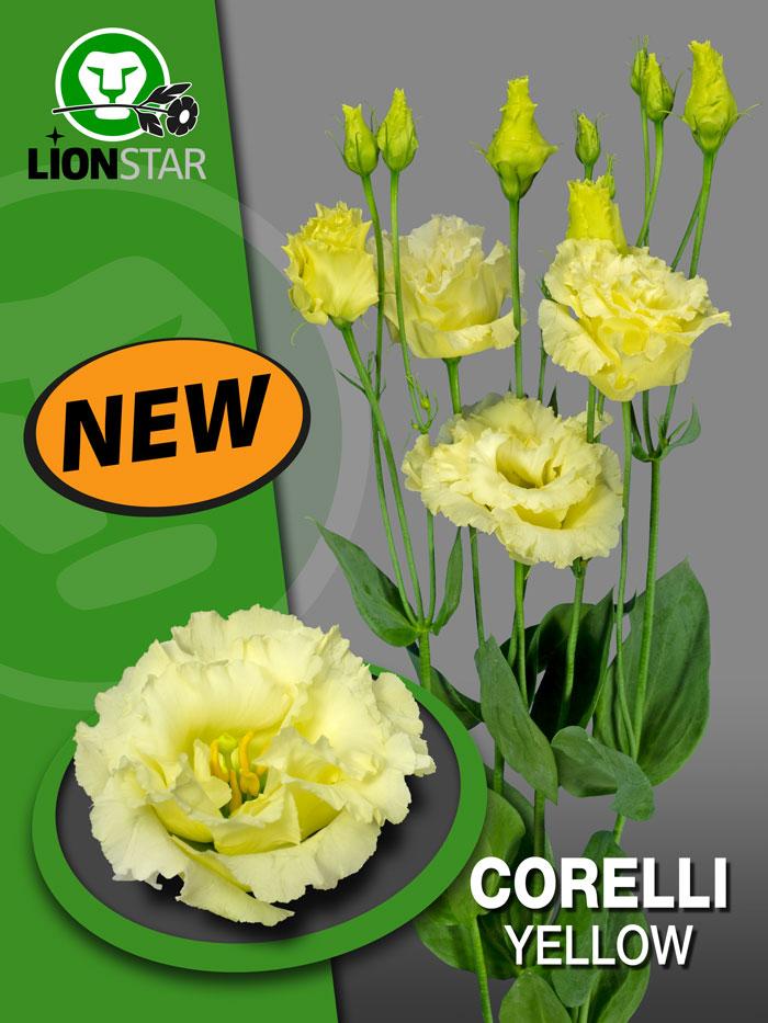 Corelli Yellow